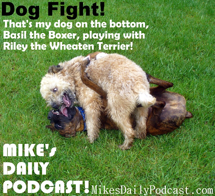 MIKEs-DAILY-PODCAST-2-13-2013-Dog-Fight-Boxer-Wheaten-Terrier