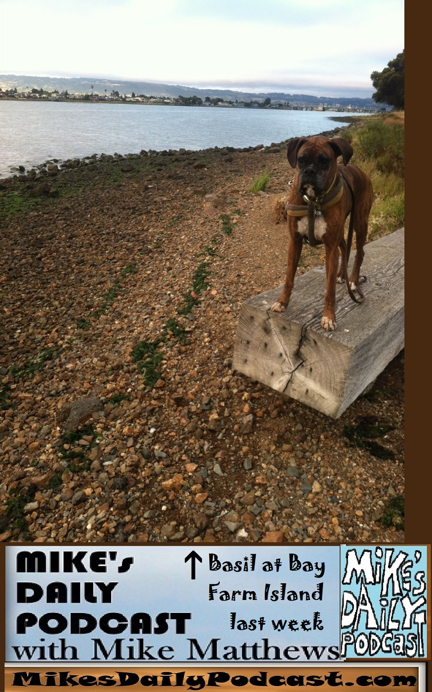 MIKEs DAILY PODCAST 1131 Bay Farm Island boxer