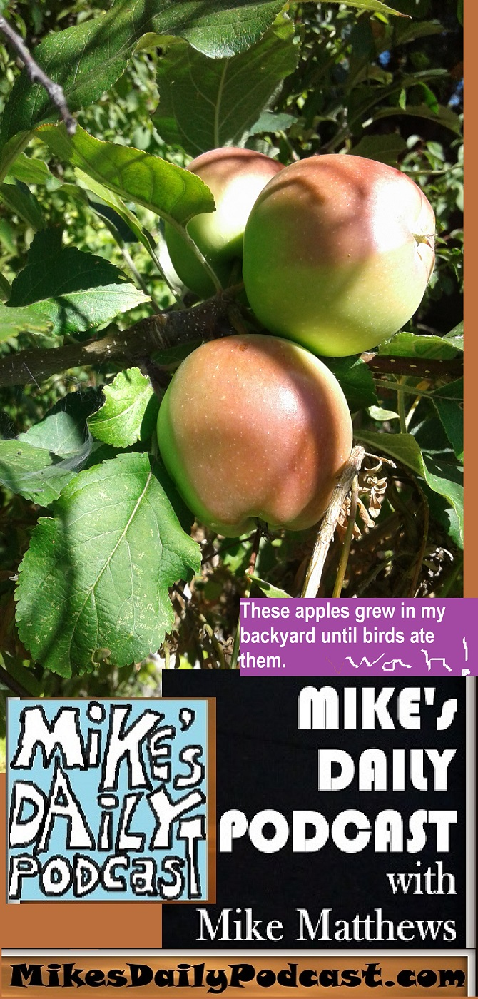 MIKEs DAILY PODCAST 1139 Mikes apples
