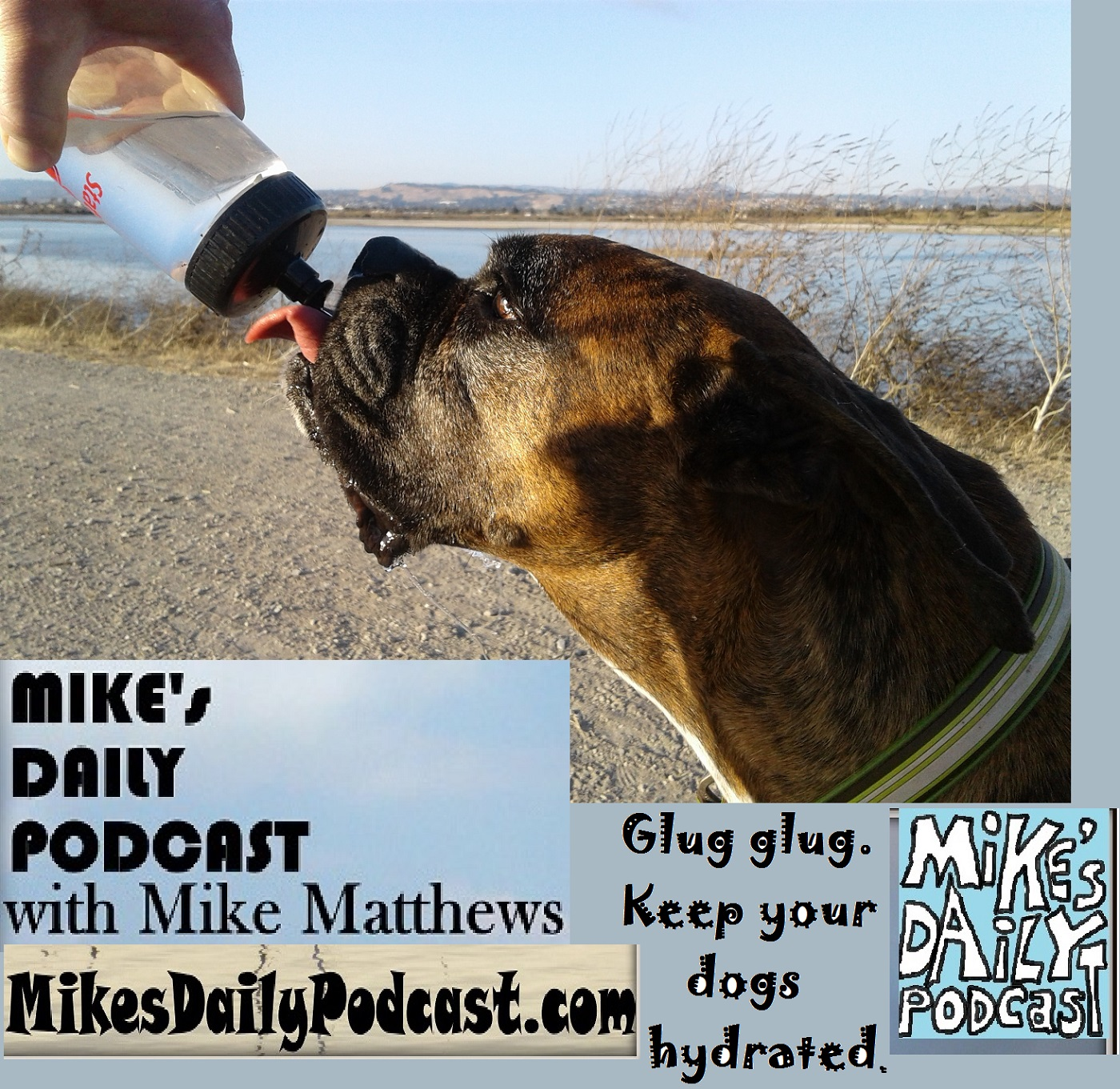 MIKEs DAILY PODCAST 1170 Hayward Regional Shoreline boxer drinks