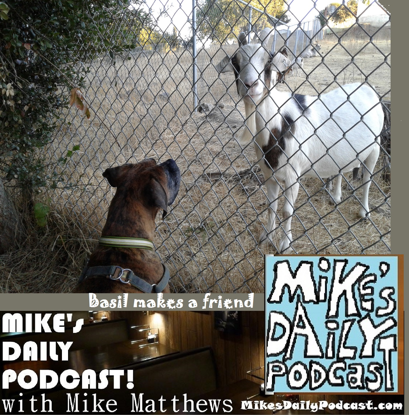 mikes-daily-podcast-1187-boxer-and-goat