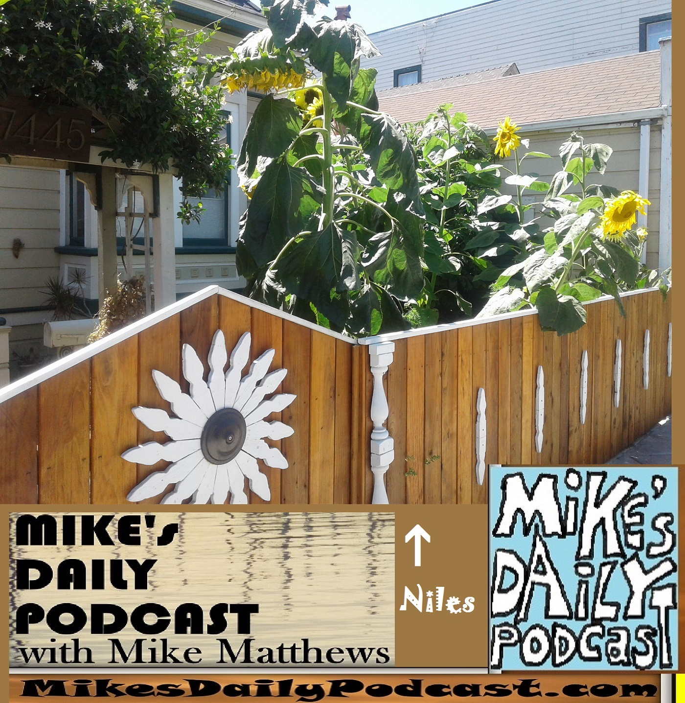 mikes-daily-podcast-1195-niles-sunflowers